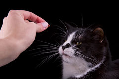 Cat sniffing Stock Images