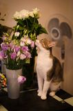 Cat sniffing bouquet of eustomes royalty free stock photo
