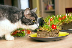 Cat sniffing cake Royalty Free Stock Photo
