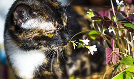 Cat sniffing flower Royalty Free Stock Image