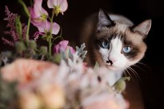 Cat sniffing flowers. Ð¡at buries her nose in a bouquet of flowers stock photo