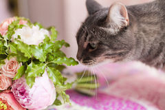 Cat sniffing flowers Stock Photo