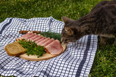 Cat sniffing ham on a wooden plate Royalty Free Stock Photo