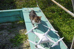 The cat sniffs the drone DJI phantom 4. Surprise the animal with a new gadget. Quadrocopter and pet. Cat and drone. Krasnodar, Russia - April 14, 2017: The cat Stock Photos