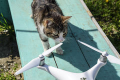The cat sniffs the drone DJI phantom 4. Surprise the animal with a new gadget. Quadrocopter and pet. Cat and drone. Krasnodar, Russia - April 14, 2017: The cat Stock Image