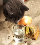 The cat sniffs the glass of vodka Stock Images