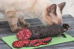 Cat sniffs pieces of smoked sausage, sliced on a wooden cutting board. Close-up, selective focus, items on an old gray wooden table royalty free stock image