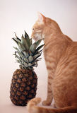Cat sniffs pineapple Stock Photos