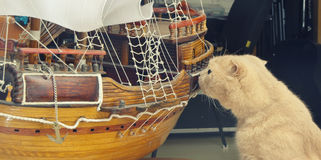 Cat sniffs sailboat Stock Photography