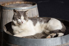 Cat snooze on a old barrel. Photo taken in a alpine village of Aosta valley Stock Images