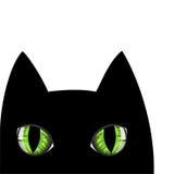 Cat snout Stock Photos