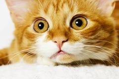 Cat snout closeup Stock Photos
