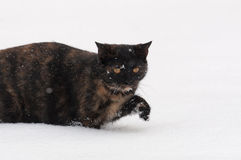 Cat in the snow Stock Photos