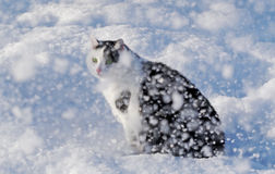 Cat and a snow. Royalty Free Stock Photo