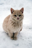 Cat on snow Stock Photography