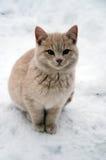Cat on snow. A yellow cat / kitten on snow Stock Photography
