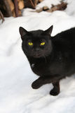 Cat in the snow. Winter time - Cat in the snow stock photography