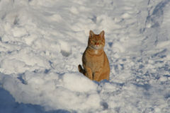 Cat in the snow. Cat sitting in the snow enjoying the winter sun Royalty Free Stock Photography