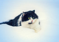 Cat in snow Stock Photos