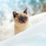 Cat in snow Stock Images