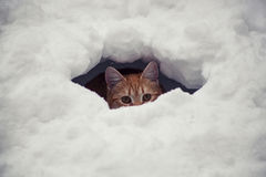Cat in the snow Stock Image