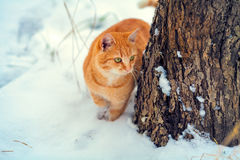 Cat in snow near tree Royalty Free Stock Photography