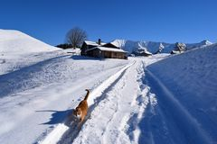 Cat in the snow. Cat on a snow path at the swiss alps Stock Photography