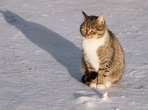 Cat on a snow Stock Photography