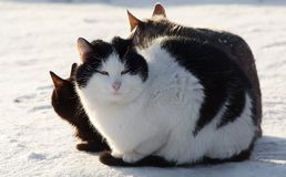 Cat on a snow Royalty Free Stock Photos