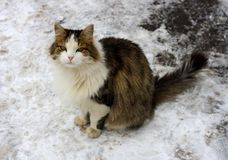 Cat in the snow. Stock Images