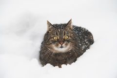 Cat in the snow Stock Photos