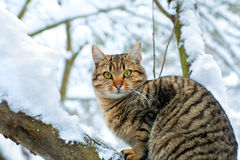 Cat on the snow Stock Image
