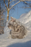 Cat in the snow is on the snowdrift Stock Photography
