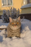 Cat in the snow is on the snowdrift Stock Images