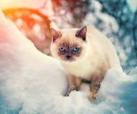 Cat in snow Stock Images