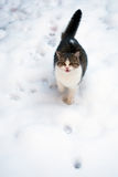 Cat in the snow Royalty Free Stock Photography
