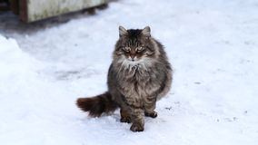 Cat on the snow stock footage