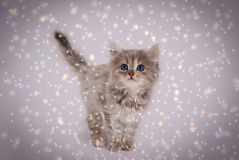 Cat in the snow.Winter snowfall. Stock Images