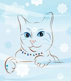 Cat and snowflakes Royalty Free Stock Images