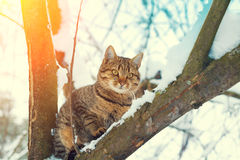 Cat on the snowy tree Royalty Free Stock Images
