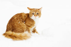 Cat snowy winter Stock Image