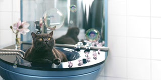 Cat and soap bubbles Stock Images