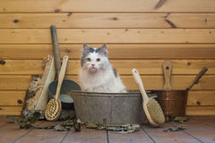Cat soared in the Russian bath Stock Images