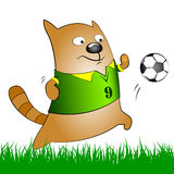 Cat with soccer ball Royalty Free Stock Photo