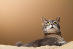 Cat on a sofa Stock Image