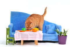 Cat on Sofa Royalty Free Stock Photography