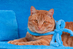 Cat on a sofa Royalty Free Stock Photos