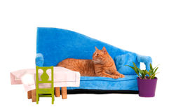Cat on a sofa Royalty Free Stock Images