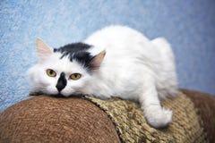 Cat on a sofa. Beautiful cat lying on a sofa Stock Image