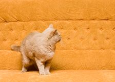 Cat on the sofa Stock Images